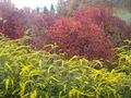 Minnesota Landscape Arboretum Fall 2010 005