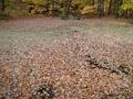 Minnesota Landscape Arboretum Fall 2010 035