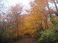 Minnesota Landscape Arboretum Fall 2010 174