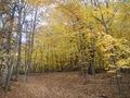 Minnesota Landscape Arboretum Fall 2010 183