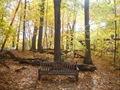 Minnesota Landscape Arboretum Fall 2010 024