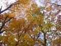 Minnesota Landscape Arboretum Fall 2010 025