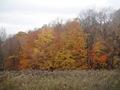 Minnesota Landscape Arboretum Fall 2010 215