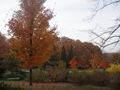 Minnesota Landscape Arboretum Fall 2010 256