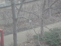 Minnesota Birds