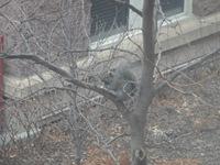 Minnesota Fat Squirrel