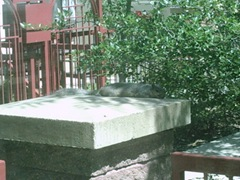 Minneapolis_Squirrel 002
