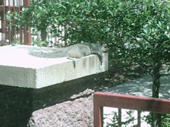 Minneapolis_Squirrel 003