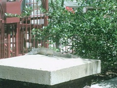Minneapolis_Squirrel 006