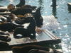 21_pier_39_sea_lions