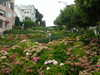 Lombard_looking_up_2