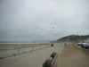Ocean_beach_seagulls
